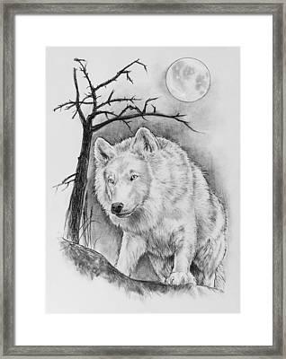 Artic Wolf Framed Print by Bernadett Kovacs