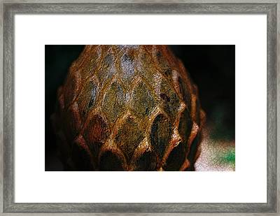 Artichoke Fountain Framed Print by Malgorzata Fairman