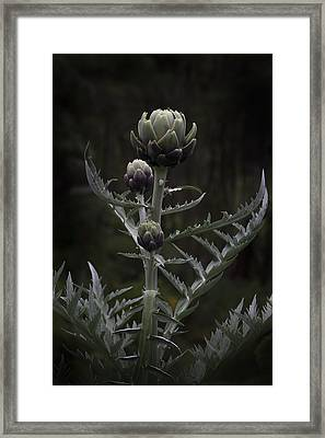 Framed Print featuring the photograph Artichoke by Jocelyn Friis