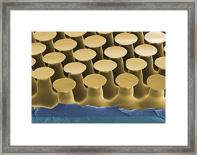 Artificial Gecko Feet Adhesive Framed Print by Science Photo Library