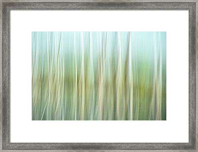 Artistic Abstract Of Trees Framed Print