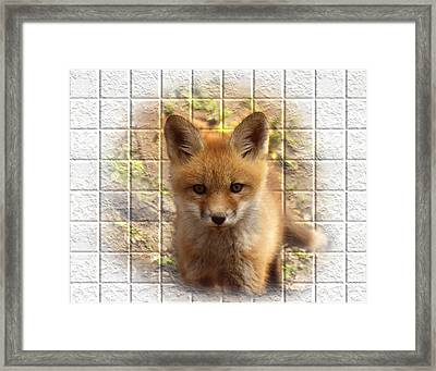 Artistic Cute Kit Fox Framed Print