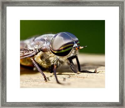 Artistic Eyes Framed Print by Dean Bennett