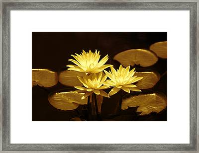 Artistic Gold Tone Water Lilies Framed Print by Linda Phelps