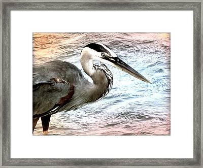 Artistic Great Blue Heron Framed Print