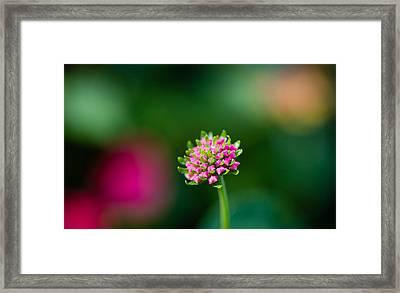 Artistic Lantana Framed Print by Christy Cox