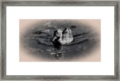 Artistic Monochrome Presentation Of Femail Duck- Female Mallard Swimming  Framed Print