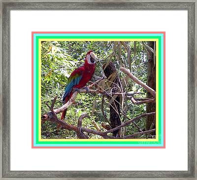 Framed Print featuring the photograph Artistic Wild Hawaiian Parrot by Joseph Baril