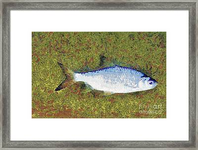 Artistically Painted Fish Framed Print by Odon Czintos