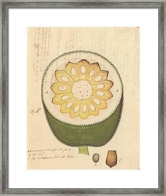Artocarpus Heterophyllus Framed Print by Natural History Museum, London