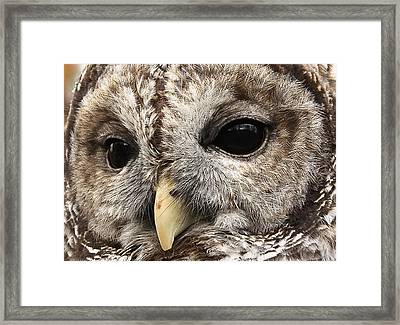 Arts Gentle Expression Framed Print