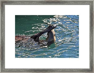 Artsy Sea Lion Framed Print
