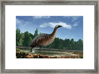 Artwork Of Giant Moa In New Zealand Framed Print