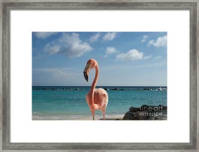 Framed Print featuring the photograph Aruba Hairy Eyeball by HEVi FineArt