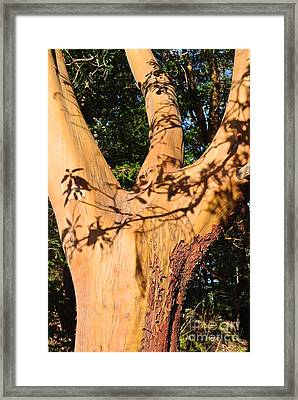 Arbutus - Shadows From Above Framed Print