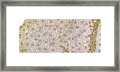Arum Leaf Surface Framed Print
