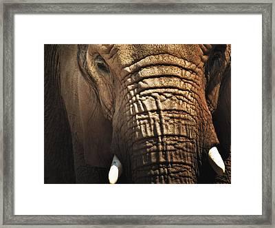 As High As An Elephant's Eye Framed Print by Susan Desmore