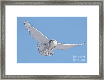 Framed Print featuring the photograph As My Spirit Soars by Heather King