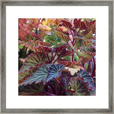 As Summer Fades To Autumn Framed Print