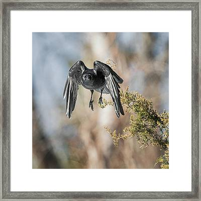 As The Crow Flies Square Framed Print