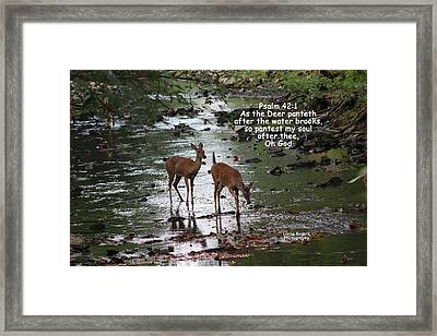Framed Print featuring the photograph As The Deer Pants For Water by Lorna Rogers Photography