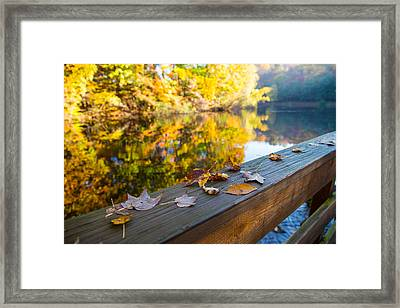As The Leaves Fall Framed Print by Karol Livote