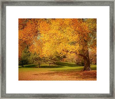As The Leaves Fall Framed Print by Kim Hojnacki
