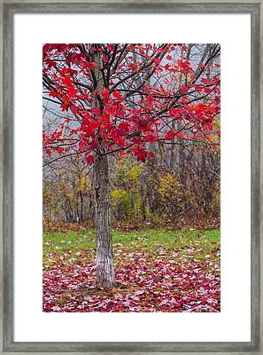 As The Red Falls Framed Print by Karol Livote