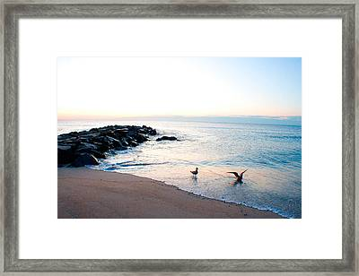 Framed Print featuring the photograph Asbury Seagulls by Jon Emery