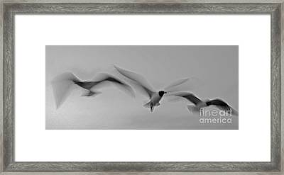 Ascending Grace Framed Print by Brian Brown