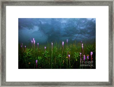 Ascension II - Blue Ridge Parkway Framed Print by Dan Carmichael