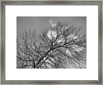 Framed Print featuring the photograph Ash And Light by Robyn King