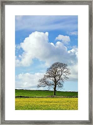 Ash Tree Framed Print by Alex Hyde