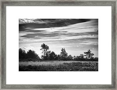 Ashdown Forest In Black And White Framed Print by Natalie Kinnear