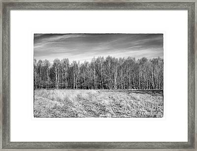 Ashdown Forest Trees In A Row Framed Print by Natalie Kinnear