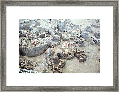 Ashfall Fossil Beds Fossils Framed Print by Jim West