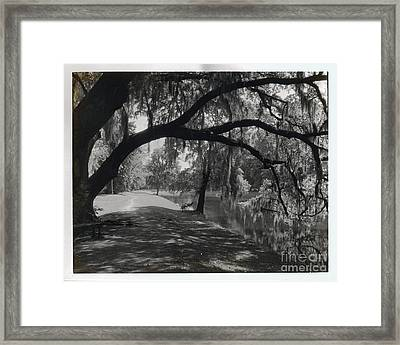 Ashley River Road Charleston S. C. Framed Print