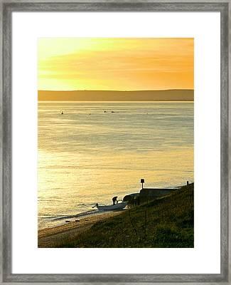 Ashore Framed Print by Sharon Lisa Clarke