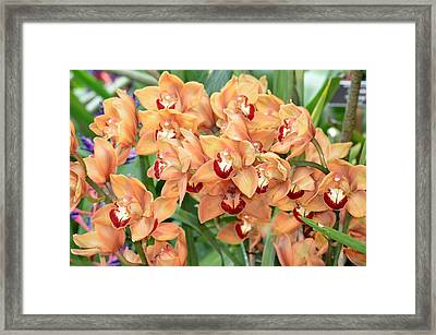 Asian Corsage Orchid Framed Print