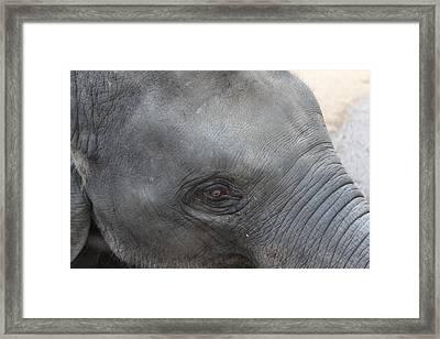 Asian Elephant Face Framed Print by Colin Smeaton