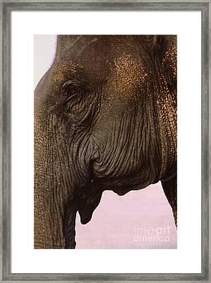 Asian Elephant In Thailand Framed Print