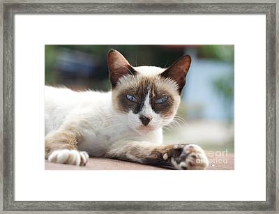 Asian Eyes Framed Print