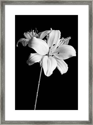 Asian Lilies 2 Framed Print