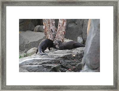 Asian Small Clawed Otter - National Zoo - 01131 Framed Print by DC Photographer