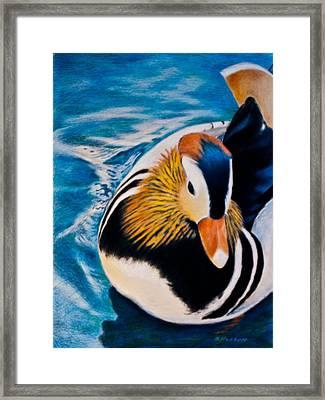 Mandarin Wood Duck Framed Print