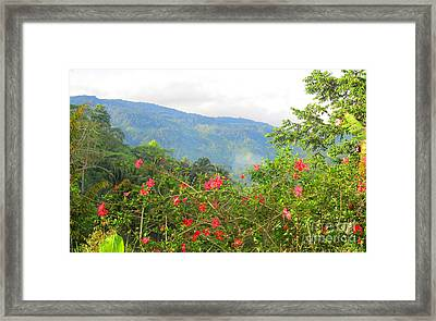 Asiatic Hibiscus Framed Print by Tina M Wenger