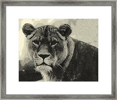 Aslan Hand Drawing Framed Print