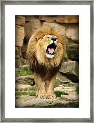Aslan's Roar Framed Print
