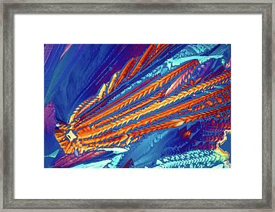 Asparagine Crystals Framed Print by Steve Lowry