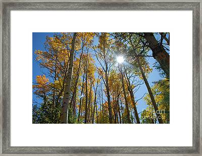 Aspen Afternoon Framed Print by William Wyckoff